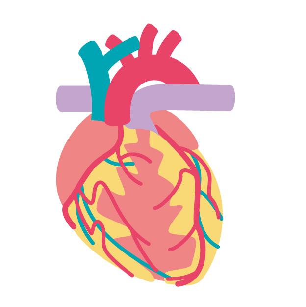 東洋医学と心臓_広島県呉市の鍼灸院・整体院【悠心堂】